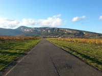 Winery path