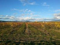 Walk among the vineyards