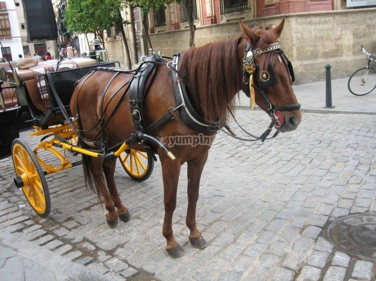享受浪漫的马车旅行