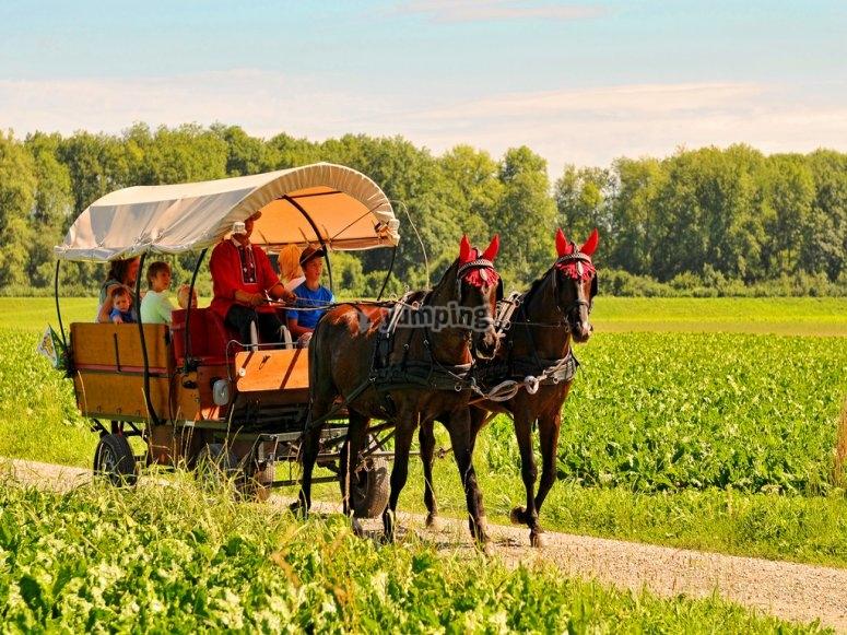 乘坐马车前往奥索纳的马车