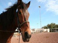 Nuestros fieles caballos