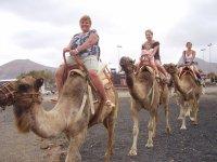 paseo a camello
