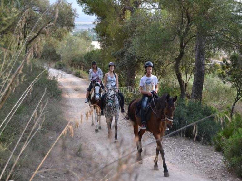 Horseback riding tour in Alcudia