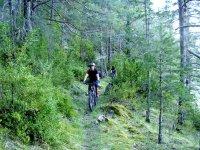 Entre densos bosques