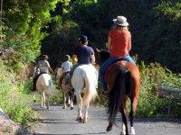 Caballos alejandose hacia la ruta