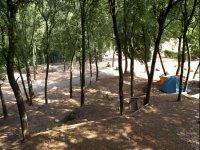 Entre bosques