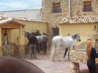 Nuestros caballos en las instalaciones
