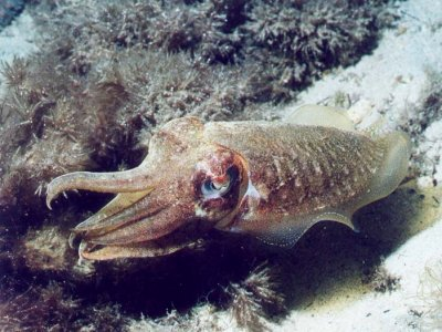 Calumet Diving
