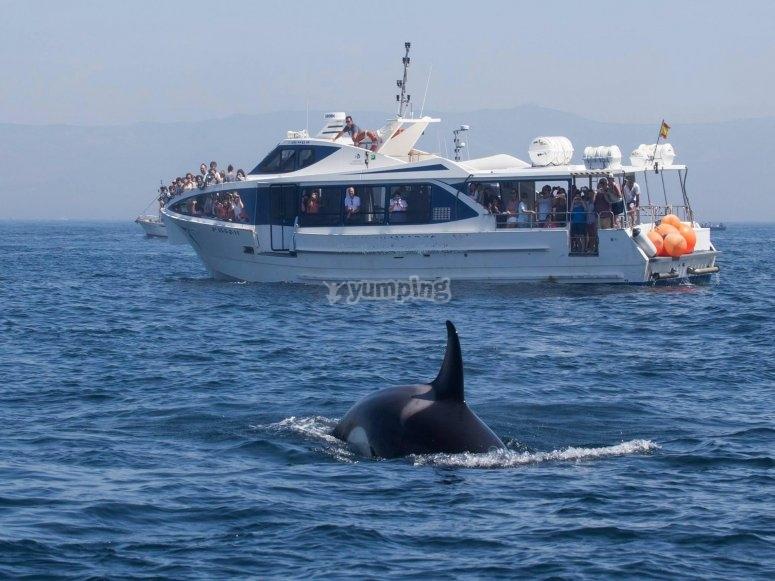 Barco y orcas