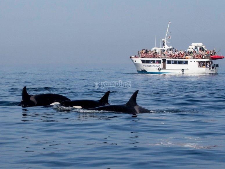 Navegando al lado de cetaceos