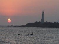 Orcas en frente a la Isla de Tarifa