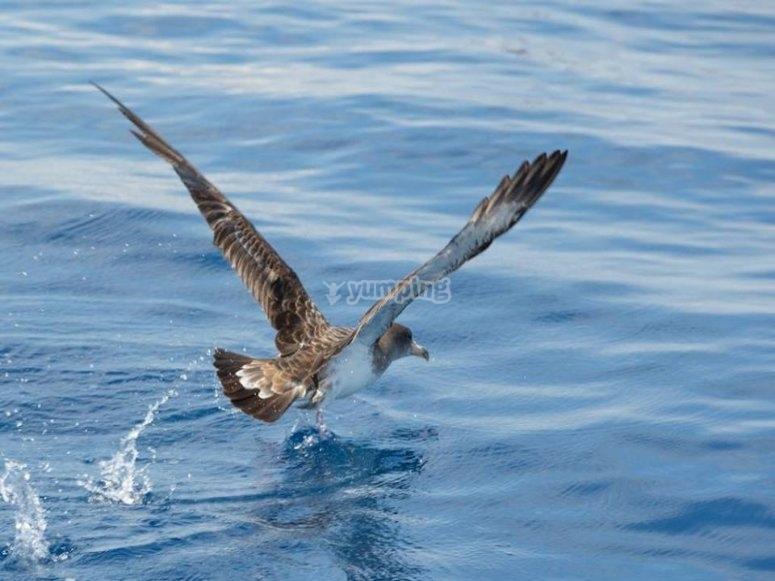 发现迁移到海峡鸟