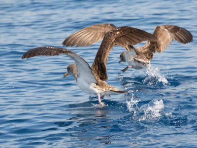 观鸟乘直布罗陀海峡