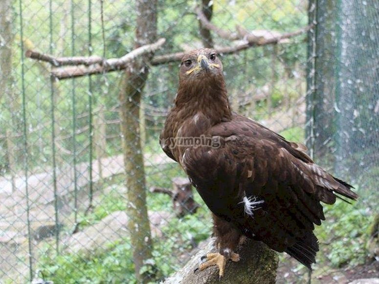 Visita el parque zoológico ornitológico en Bravos