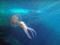 Te encontraras con medusas