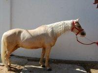 Hermoso ejemplar de caballo