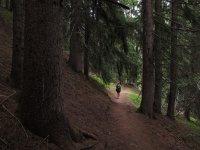 bosque senderismo