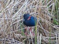 发现栖息在我们土地上的鸟类