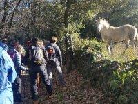 在巴塞罗那远足径上看到一匹马