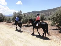 Horse Riding on Olive Trees and Rural Roads