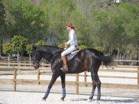 Camminando con uno dei nostri cavalli