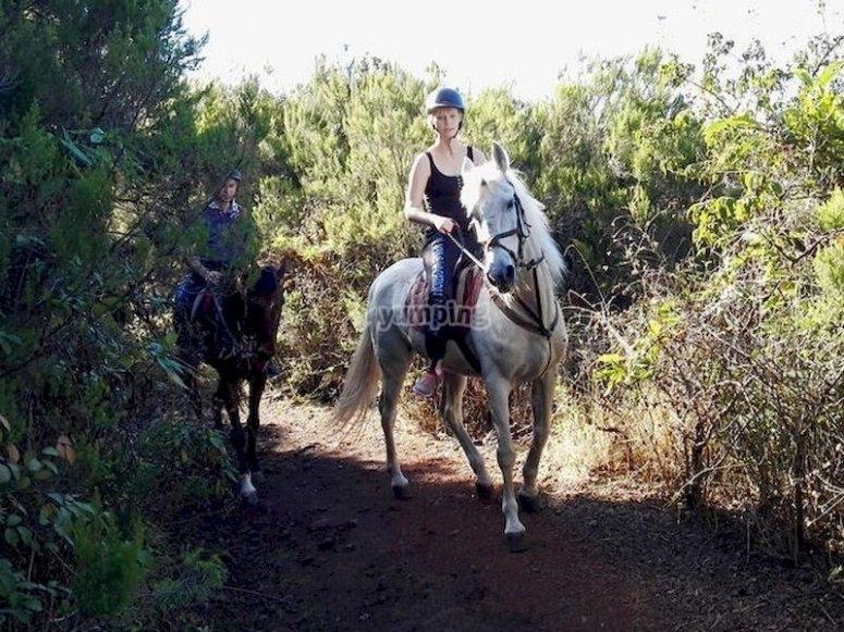 Siéntete un verdadero jinete montando a caballo por Icod de los Vinos