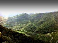 Región de vinos por excelencia