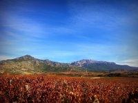 Paso a paso descubre La Rioja