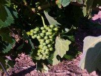 Aprende más sobre la elaboración del vino