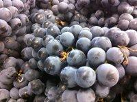 Elaboración del vino en la bodega