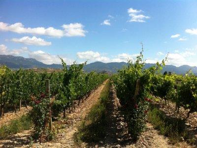 Rioja Alavesa Turismo