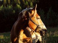 Equitazione a Granada per tutte le età