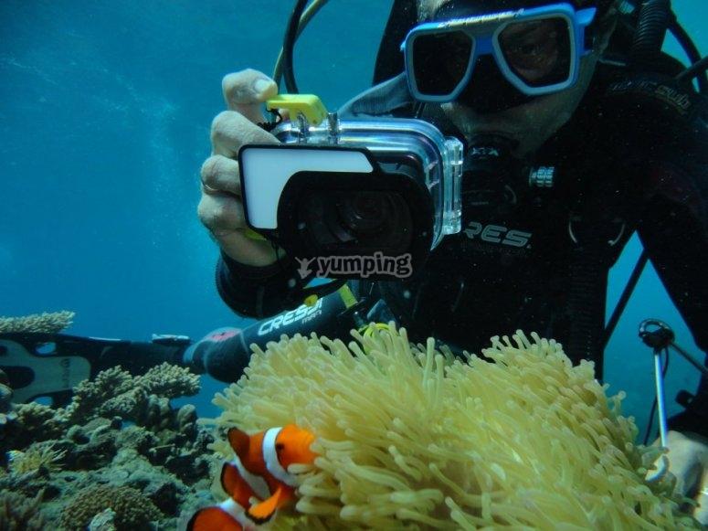 Fotografiando享受潜水的海洋生物