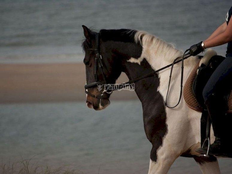 Cabalga por las playas de Son Serra de Marina