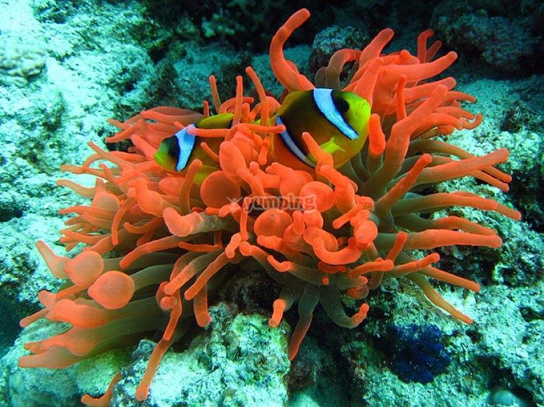 Beauté sous-marine
