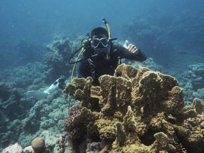 在滨海略雷特海中潜水