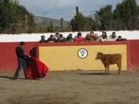 Esperando a la vaquilla