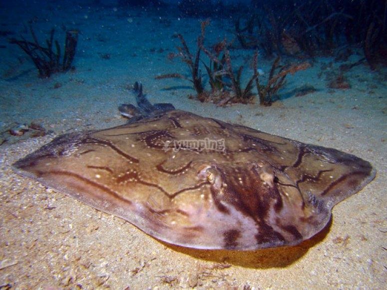 Coperta sul fondo del mare