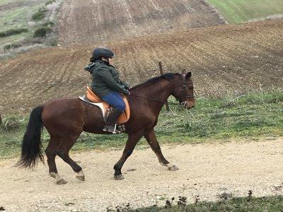 Club hípico La Janda Clases de Equitación