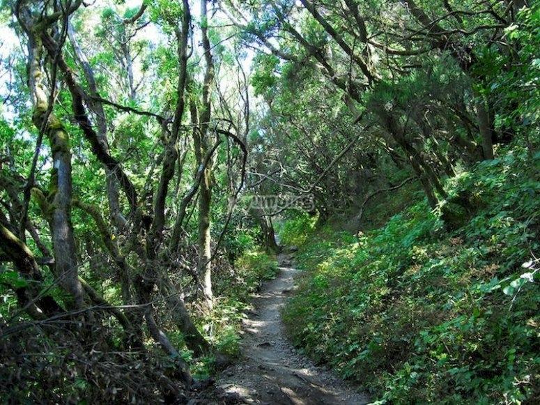 Senderismo por el Parque Nacional de Garajonay