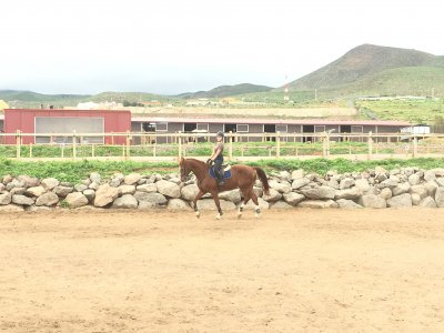 Horse Riding Lessons 4h in Telde