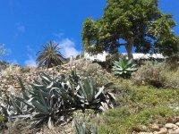 Paisaje de La Gomera