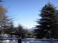 Estampa美丽的冬季多雪的树林