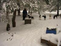 成为雪地雪橇犬准备