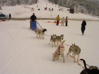Sled by dogs