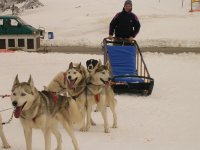 狗拉雪橇musher