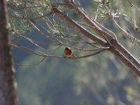 Aves de la Sierra