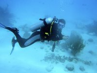 标志海潜水计划的底部