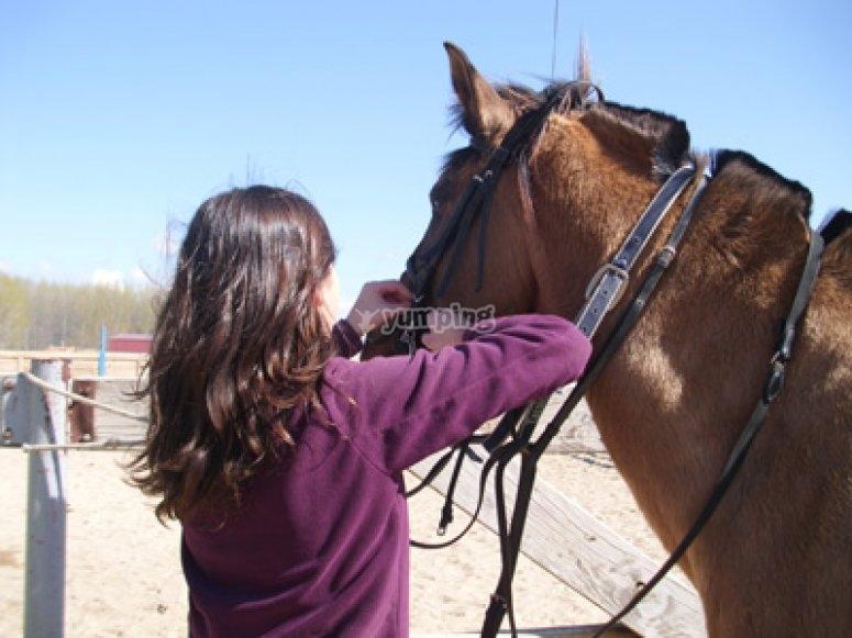 Preparando al caballo para la clase