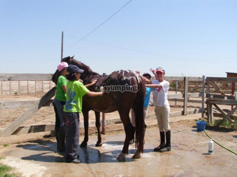 Tenemos que duchar al caballo después de montar